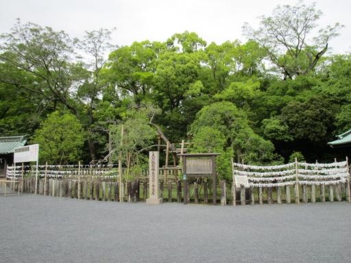 三島大社 金木犀