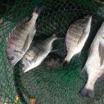 2017/09/16 紀州釣り釣行記 雨降りでも釣れれば楽しい!