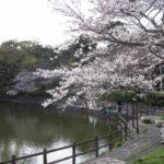 清水船越堤公園でお花見&散策