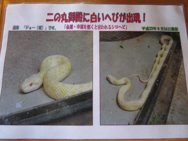 掛川城 ヘビ
