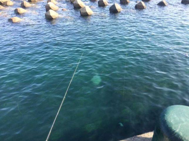 広野海岸公園 釣り風景01