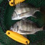 8月、お盆休み中の紀州釣り釣行記