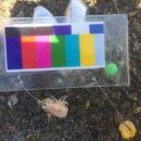 水中での色の見え方について~どんな色が目立つのか~