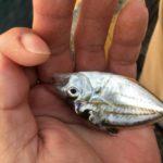 2018年4月22日 紀州釣り釣行記 静岡県焼津新港 相変わらず釣れません