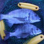 2018年8月12日 紀州釣り釣行記 静岡県用宗港 何とか本命が釣れました【2018年8月14日追記】