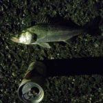 2018年10月28日 紀州釣り釣行記 静岡県用宗港 大荒れの一日でした