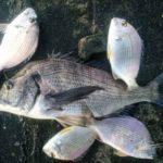 2019年1月3日 紀州釣り釣行記 静岡県用宗港 今年の初釣り