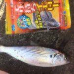 2019年1月13日 紀州釣り釣行記 静岡県焼津新港 チヌはどこに?