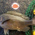 2019年5月18・19日 紀州釣り釣行記 焼津新港と用宗港 メジナが釣れました
