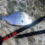 2019年6月8・9日 紀州釣り釣行記 静岡県用宗港 竿が折れました・・・が。