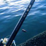 2019年6月16日 紀州釣り釣行記 チヌ竿デビューは散々でした