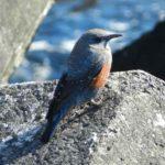 釣りの合間に・・・用宗港の野鳥観察