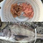 釣りエサ加工実験 オキアミの昆布締め