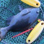 2020年2月1・2日 紀州釣り釣行記 静岡県用宗港 満足でしたが・・・