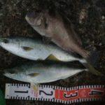 2020年11月1日 紀州釣り釣行記 静岡県用宗港 転ばぬ先のバスロッド