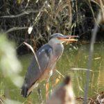 近所へ散歩に~麻機遊水地へ野鳥観察に行ってきました
