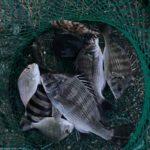 2021年9月23日 紀州釣り釣行記 静岡県用宗港 多様性社会